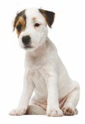 Strava pre psov