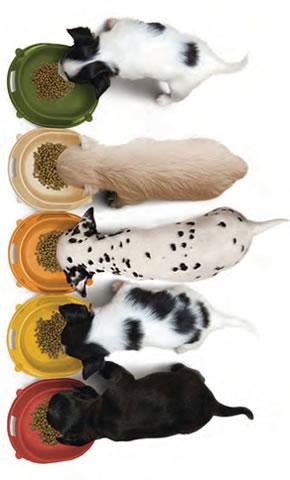 Zloženie jedinečného alkalického krmiva pre psov