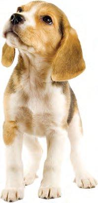 Zoznámte sa s Canine Caviar - ultraprémiové krmivo pre psov